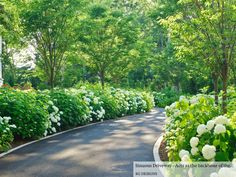 Lovely drive/entrance. White hydrangeas. Drive bordered in white granite.
