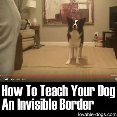 How To Teach Your Dog An Invisible Border ►► lovable-dogs.com/...