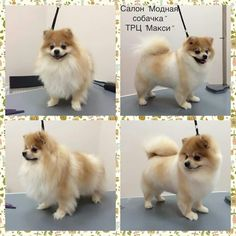 275 Best Before After Dog Grooming Photos Images Dog