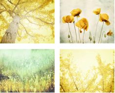 Nature Photography Set of 4 Four Prints, Lemon Yellow Wall Art, Aqua Mint Green Wall Art 8x10 Print Set, Gingko Tree Art, Instant Collection...