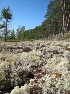 Kuosto island in Oulujärvi, Finland. Peaceful...