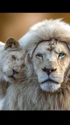 Entre père fils ( animal )