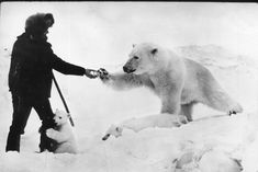 The 1950s: Doing it right. Man handing a mama polar bear a can of sweetened condensed milk while the cub gives him a hug. Eastern Russia, where the temperatures can drop so far that even polar bears are in danger of freezing or starving. The few inhabitants of the area at the time, even though they couldn't afford to give much, would feed the mother bears so that they could produce enough milk for their cubs.
