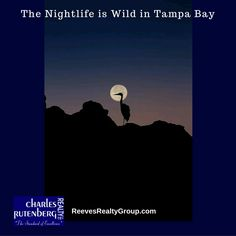 The Nightlife is Wild in Tampa Bay on the Florida Suncoast in Tampa, St. Petersburg, Clearwater.