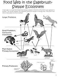 A Simple Explanation of the Food Chain in the Tundra