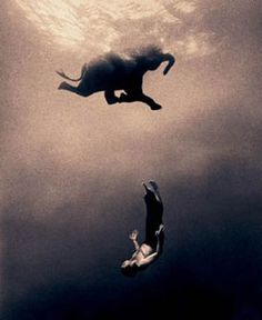 One of my all time favs..... swimming elephant    photography by Gregory Colbert.
