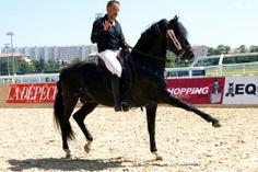 #Cheval #Horse #Pferd #SalonduChevalToulouse #Minorquin