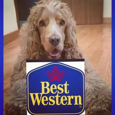 Best Western Tour : di cosa si tratta The italian dog blog