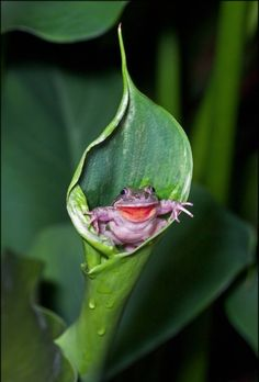 Hahaha. Purple little froggy sittin on a leaf