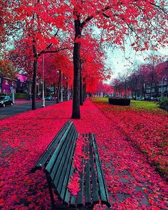 Colourful Amsterdam.   For some great tips, tours and experiences to enjoy on…