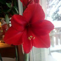 flowers Flowers, Plants, Flora, Royal Icing Flowers, Floral, Plant, Florals, Flower, Bloemen
