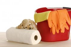 Photo about House training puppy - cute cocker spaniel puppy resting head on paper towels with pail and bucket. Image of cocker, paper, housebreak - 18067100 Puppy Potty Training Tips, Training Your Dog, House Breaking A Puppy, Dog Urine, Puppy House, Spaniel Puppies, Retriever Puppies, Cocker Spaniel, Labrador Retriever
