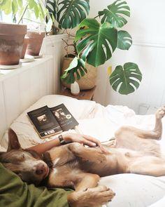 """Snooze city with tropical dingo"""