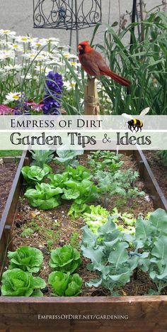 Empress of Dirt gardening tips and ideas at http://empressofdirt.net/gardening/