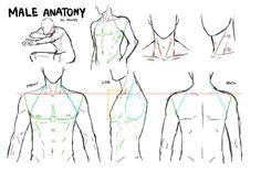 anatomia tórax