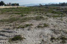 La sequía podría provocar la desaparición del 30% de los productores de frutas y hortalizas, según Asaja-Murcia