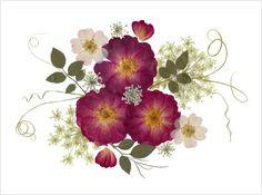 Conjunto de 6 tarjetas de tarjetas  rosas  por VTPressedFlowers