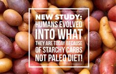 A new study by the University of Sydney has revealed that it was starchy carbohydrates that were fundamental in the evolution of the human brain – not meat. The study published in the Quarter…