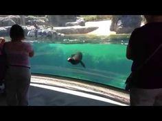 Sea Lion Gets Concerned About Little Girl