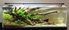 Austin's Aquascaping Journal | Page 3 | AquaScaping World Forum