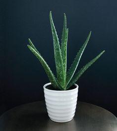 Plantas para decorar o quarto!