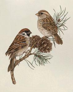 Sparrow Art Print, Bird Art Print, Sparrow Illustration, Wildlife Art, Nature Art Print, Bird Poster, Bird Wall Art, Garden Birds Art