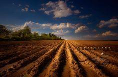 Landtrust of Tennessee: Graceland