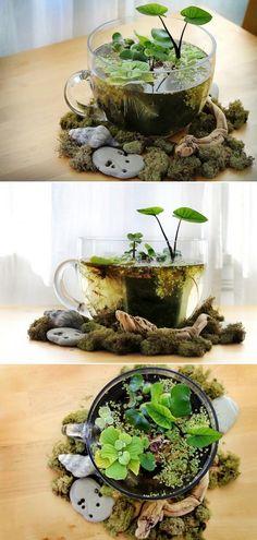 DIY Tabletop Water Garden                                                                                                                                                                                 More