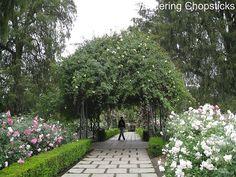 Huntington Library and Botanical Gardens, San Marino, California - rose garden