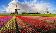 Dutch flower field - it is tulip time again. I want to go back again even though it was part of our family trip just last year.