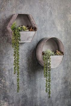 Zinc Wall Planter - Vagabond Vintage Furnishings Source by Walled Garden, Hanging Planters, Outdoor Wall Planters, Succulent Wall Planter, Hanging Plant Wall, Diy Wall Planter, Planter Ideas, Diy Hanging, Hanging Terrarium
