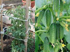 Natural Garden, Indoor Plants, Bonsai, Vegetables, Rose, Nature, Gardens, Cactus, Flowers