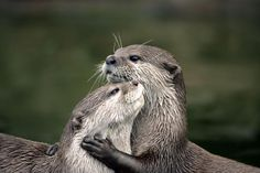 Hayvanlar aleminde aşkın varlığını kanıtlayan 49 fotoğraf