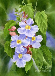 Blue Sky Vine With Background Print By Sharon Freeman