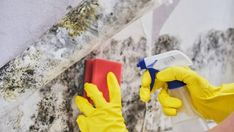 Black Mold Removal: 7 Effective Hacks to Clean black Mold Clean Black Mold, Clean Up, Cleaning Mold, Cleaning Hacks, Cleaning Products, Mold Cleanup, Apple Benefits, Get Rid Of Mold, Remove Mold