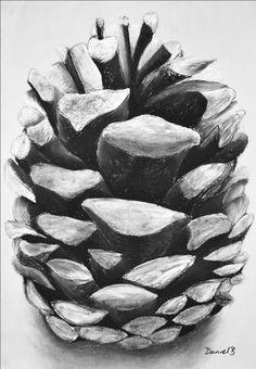 Pinecone, charcoal drawing A2 - daniel barrett