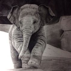 Pencil sketch ! Love how she did the rough skin of the elephant