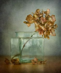 dried hydrangea is beautiful Hortensia Hydrangea, Hydrangea Garden, Still Life Flowers, Still Life Photos, Arte Floral, Still Life Photography, Botanical Art, Dried Flowers, Beautiful Gardens