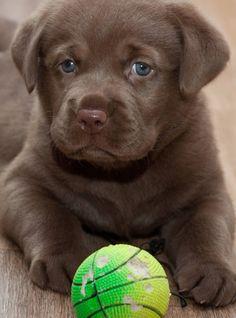 Mollllyyy.. This is you!! Hahahaa cute cute :)
