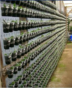#vertical #orchid #gardenVertical orchid  garden