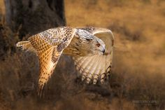 Bubo Bubo in Flight by Mario Moreno on 500px