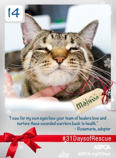 By the time Mojave was 5 years old, he had seen more than most cats will in a lifetime. Born into the home of a cat hoarder, the tabby also suffered from three painful conditions that left him with unformed eyelids and a perpetual squint. His future looked grim, until the ASPCA rescued him and performed a life-changing surgery to give him new eyelids. After healing, Mojave was adopted into a loving home. #31DaysofRescue