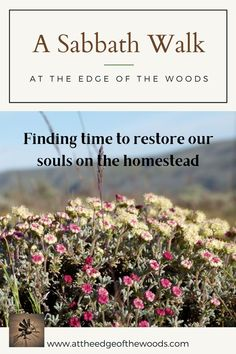 Finding time to restore our souls on the homestead Milk The Cow, Pest Management, Sabbath, Permaculture, Garden Beds, Restore, Homesteading, Restoration, Blog