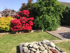 Woodlea's landscaped fully enclosed back garden with beautiful flowers and shrubs. there's a deck overlooking the bay and Goatfell. Isle Of Arran, Back Gardens, Shrubs, Stepping Stones, Beautiful Flowers, Scotland, Sidewalk, Deck, Landscape