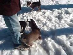 A Dog's Life-my sweet Ginsberg shows up toward the end of the video Alaskan Husky, Husky Puppy, Dog Life, Passion, Puppies, Sweet, Dogs, Youtube, Animals