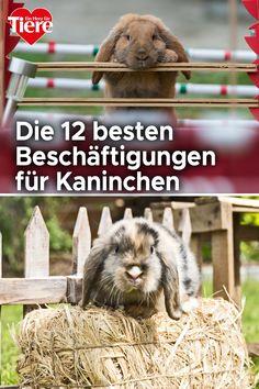 Dove Cameron, Barbie, Rabbit Treats, Rabbit Toys, Guinea Pigs, Cats, Pet Dogs, Dwarf Rabbit, Small Animals