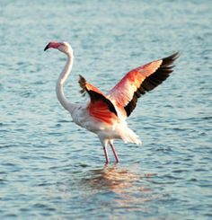 i love sardinia Sardinia, Long Legs, One Pic, World, Pictures, Terra, Animals, Birds, Country
