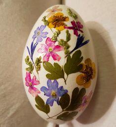 Getrocknete Blüten getrocknete blüten auf einem gänseei adris scratched eggs