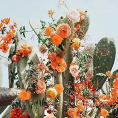 Cactus in bloom Garden Care, Wild Flowers, Beautiful Flowers, Desert Flowers, Beautiful Dresses, Ramona Flowers, Hippie Flowers, Desert Cactus, Flowers Nature