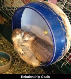 20 Adorable Animal Couples That Will Melt Your Heart.